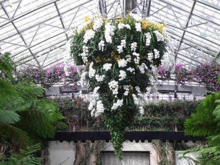Orchid Chandalier