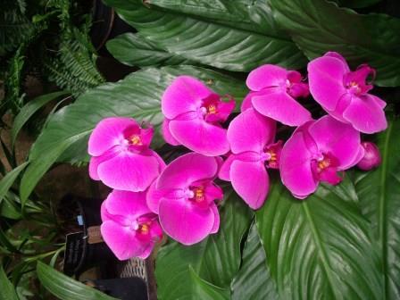 LGpurplespecialorchids3