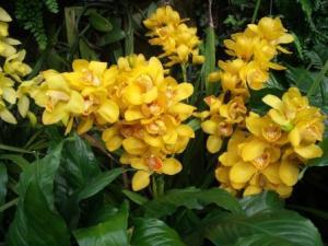 LGyelloworchids