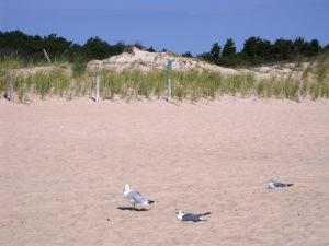 lewesbeachbirds