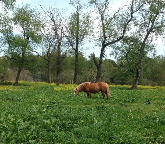 Horses4