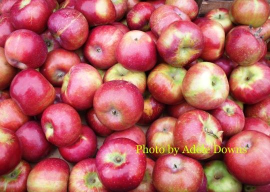 HO_Apples