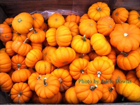 HO_PumpkinGourds