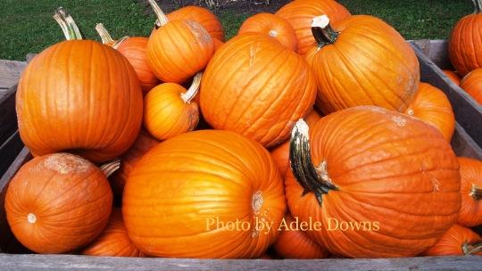 HO_Pumpkins