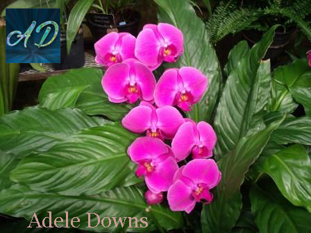 LGpurplespecialorchids2signed copy