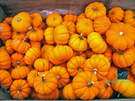 fallsmallorangegourds15signed