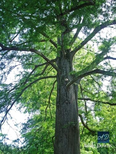 TreeatTAsigned