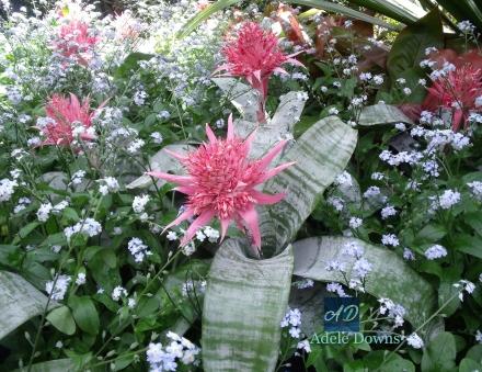 popofpinkflowersigned